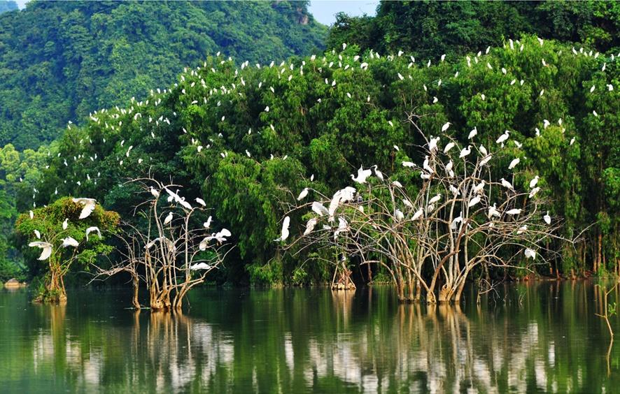 Sân chim Vàm Hồ làđịa điểm du lịch Bến Tre nổi tiếng